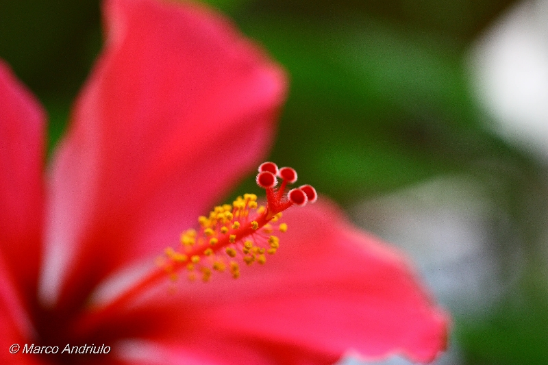 bothanic-garden-92